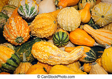 Fall Gourds at Harvest
