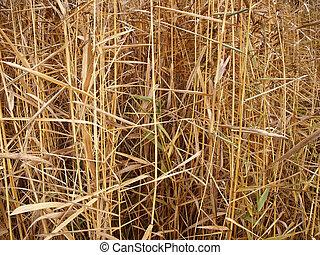 Fall grass background - Autumn grass background