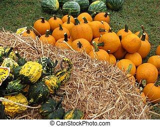 Fall harvest