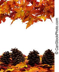 Fall Harvest Border