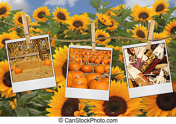 Fall Harvest Images on Film