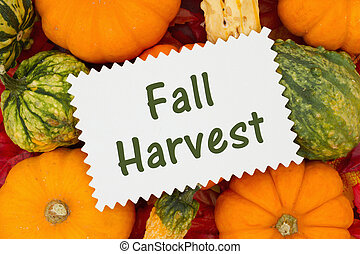 Fall Harvest message