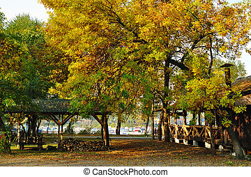 Fall in countryside