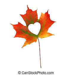 Fall In Love Photo Metaphor. Red Maple Leaf With Heart Shaped isolated on white