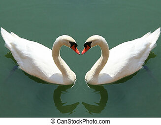 fall in love - couple of swans fall in love - love symbol...