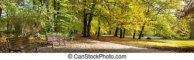 Fall in the public park