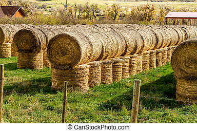 Fall in Steamboat Springs Colorado - Large rolls of hay...