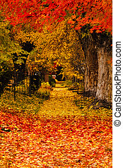 Fall in the City - Fallen leaves covering sidwalk path lined...
