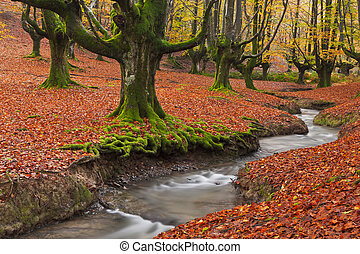 Fall in the forest - The falling leaves colors the autumn ...