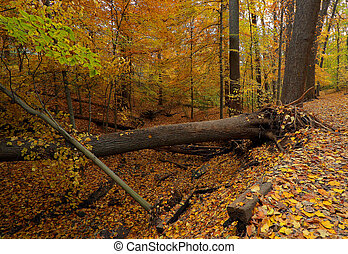 Fall in Washington DC