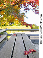 Fall Japanese Maple Leaves on Wood Bench
