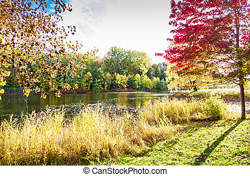 Fall landscape in park of Montreal Quebec