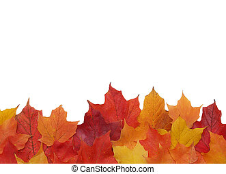 fall leaf border - bottom border of colorful fall leaves