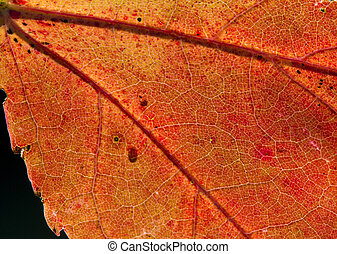 Fall Leaf Close Up 2