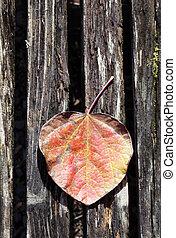 fall leaf - tree leaf on wooden surface