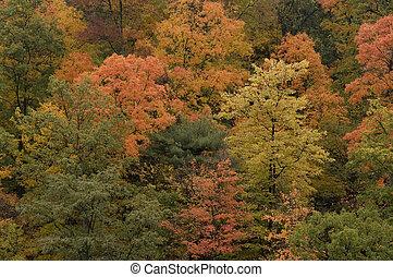 Fall Leaves -1