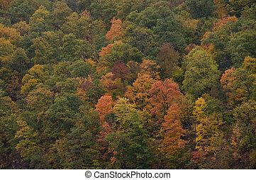 Fall Leaves -2
