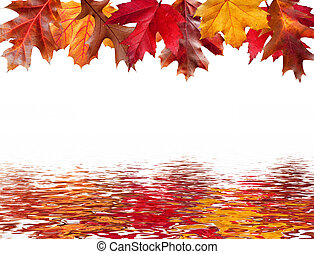 Fall leaves and water reflection around a message area