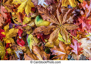 Fall leaves background. Colorful autumn background.