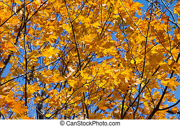 Fall Leaves Background Texture