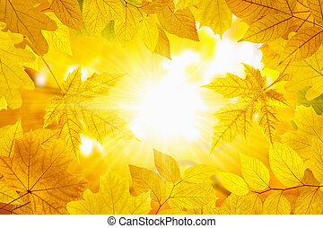 Fall leaves - Beautiful nature autumn background - yellow...