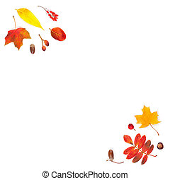 Fall leaves corners composition isolated on white. Bright autumn leaves background border