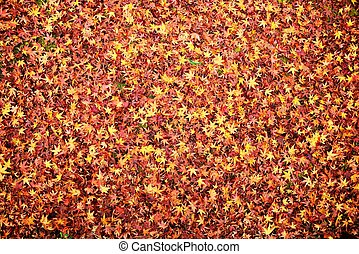 Fall Leaves - Fall leaves indicating the seasonal change in...