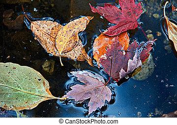 Fall Leaves Floating in Blue Pool