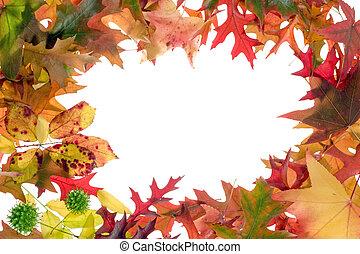 fall leaves frame 1