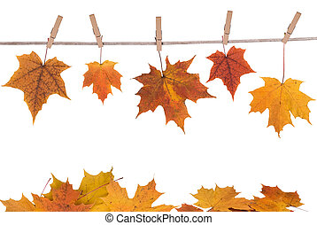 fall leaves hanging on a clothesline isolated on white