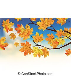 Fall leaves in front of blue sky with clouds.