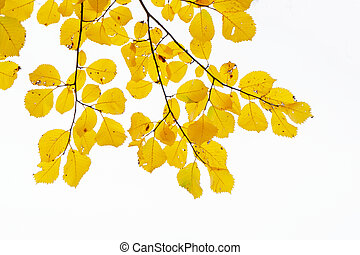 Fall leaves in park