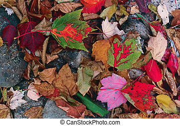 Fall Leaves in the Morning - The Fall forest floor carpeted...