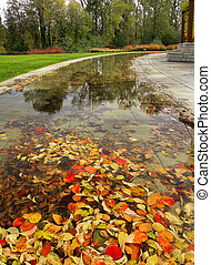 Fall Leaves in the Pond at the Park