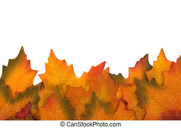 Fall leaves isolated on white at the bottom border, Autumn border