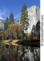 Merced River, Yosemite - Fall leaves log jammed on the...