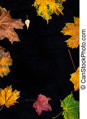 Fall leaves on a solid black background.