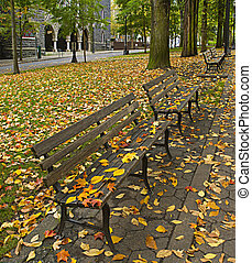 Fall Leaves on Benches Along Park 2 - Maple and Elm Tree...