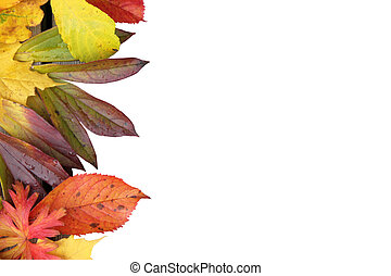 Fall leaves on white