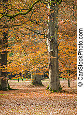 fall leaves trees at park