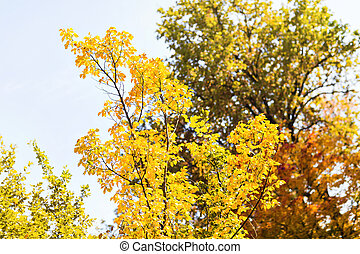fall leaves trees, autumn concept