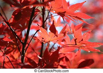 Fall Leaves2 - Fall Leaves Closeup