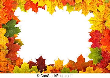 Fall maple leaf border