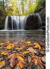 Fall Maple Leaves at Hidden Falls