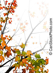 Background of fall maple leaves and tree branches