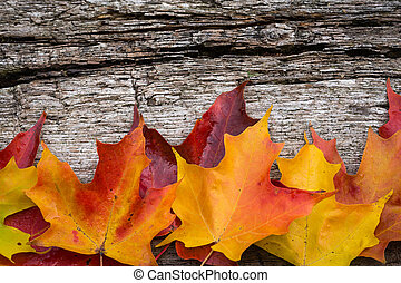 Fall maple leaves on wooden table