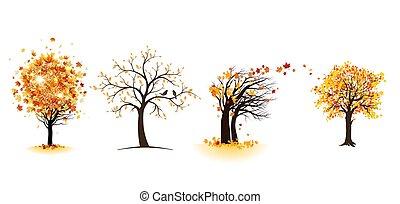 Fall maple trees set