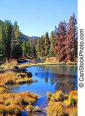 Fall Morning Pond in Colorado