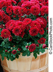 Fall Mums in Baskets