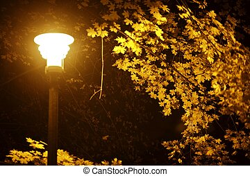 Fall Night in Park. Dark Fall in the City Park. Yellow Leafs...
